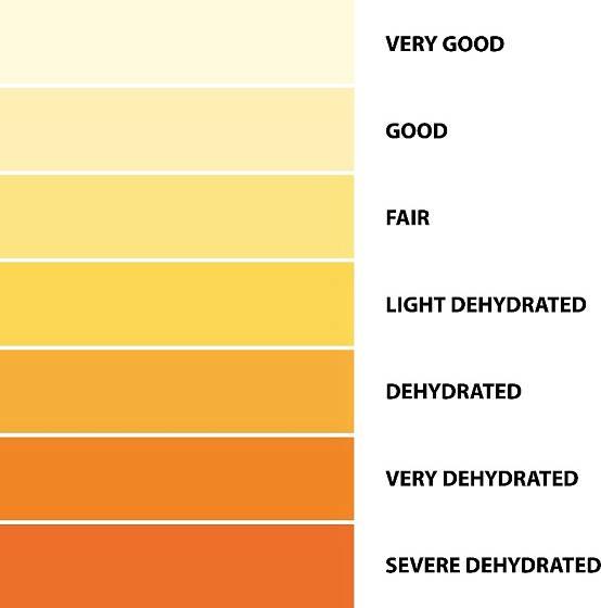 Barva moči napoví i to, zda není organismus dehydratován.