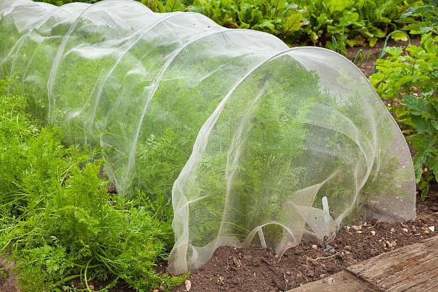 Jediným zaručeným způsobem, jak ochránit různé druhy zeleniny před ničivými larvami muchnic, je nainstalování jemné síťoviny.