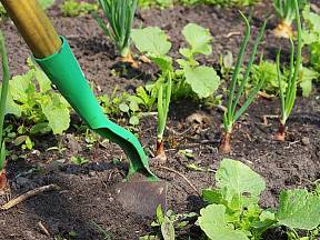 Mezi řádky odstraníte plevel snadno