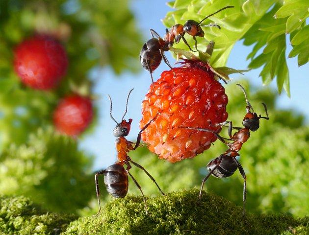 Skořice vyžene z vaší zahrady mravence.