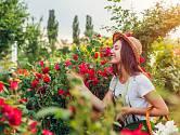 Letní řez růží je důležitý pro bohaté kvetení.