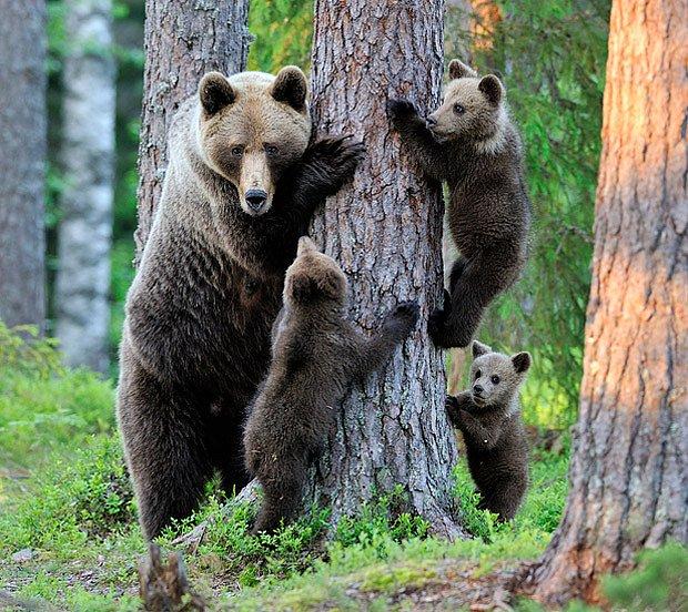 medvědí škola šplhu