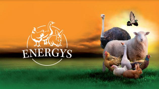 energyshobby