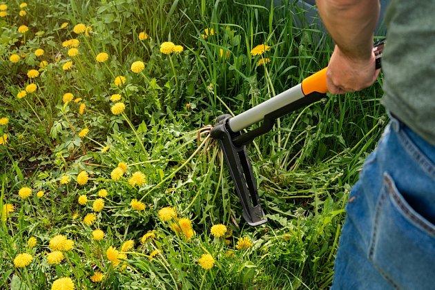 Vytrhávač se hodí na odstraňování plevele s dlouhými kořeny, např. pampelišek.