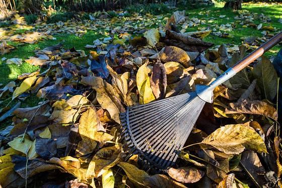 Ořešákové listí je cenný materiál