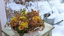 Za mírné zimy mohou být primulky i venku.