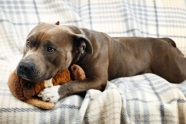 Psi si pamatují nejen své oblíbené lidi, ale i své oblíbené hračky