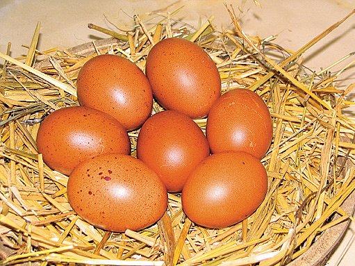 vejce jako z čokolády