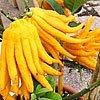 buddhova ruka