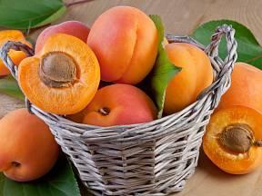 Čerstvě sklizené plody meruněk.