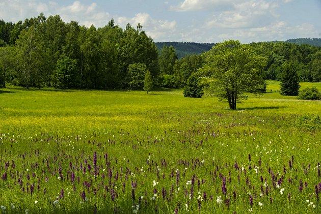 Podmáčená louka Slunečná stráň se pyšní množstvím orchidejí.