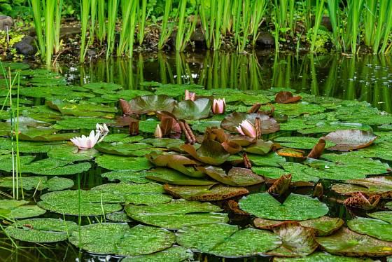 Prostředí s vodou v zahradě je rájem pro všechno živé.