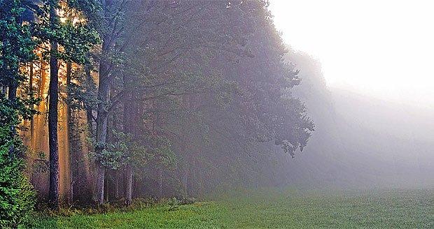 Paprsky a mlha