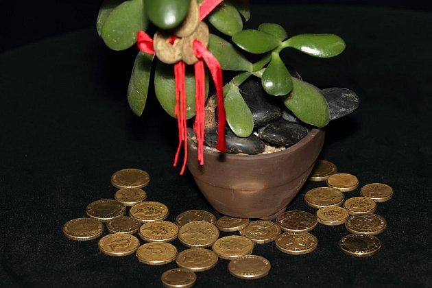 Rostliny, které si umístíme do bytu, mohou ovlivňovat i náš život. Příznivě i nepříznivě.