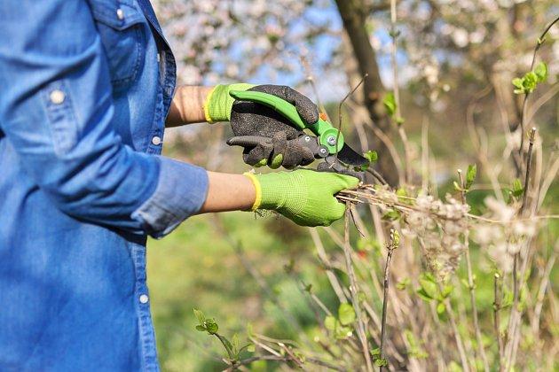 Odstraňte odumřelé výhony. Květině tím ulevíte a poskytnete lepší proudění vzduchu, čímž podpoříte silnější růst.