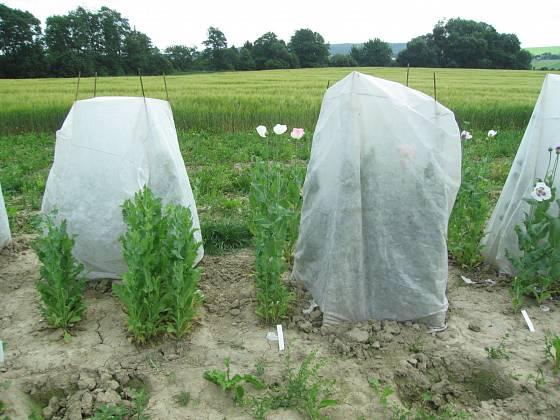 Izolační kryty s textilií se používají v genových bankách. Zde chrání makové květy