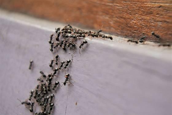 Mravenčí cestičky přerušte aromatickým kořením, například hřebíčkem.