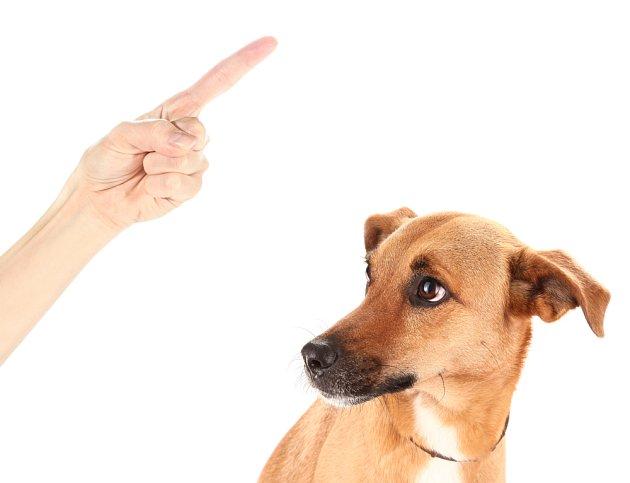 Ke svému psovi mlžete promlouvat i formou posunků.