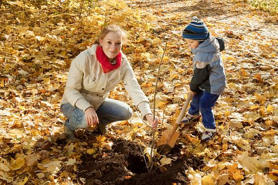 Sázení stromků může být velká událost pro děti i rodiče