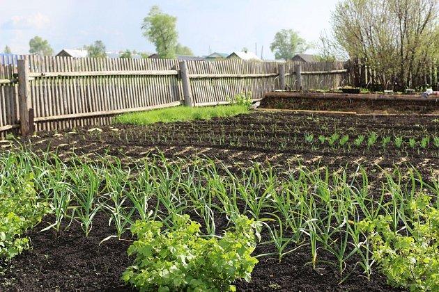 Zeleninovou zahradu se vyplatí dobře naplánovat, zvláště pokud semenaříme