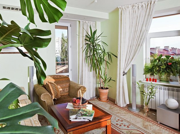 Každé pokojové rostlině je třeba najít vhodné místo.