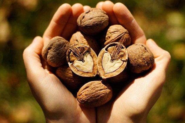 Ořechy mohou být silným alergenem, ale jejich pozitivní vlastnosti významně převládají.