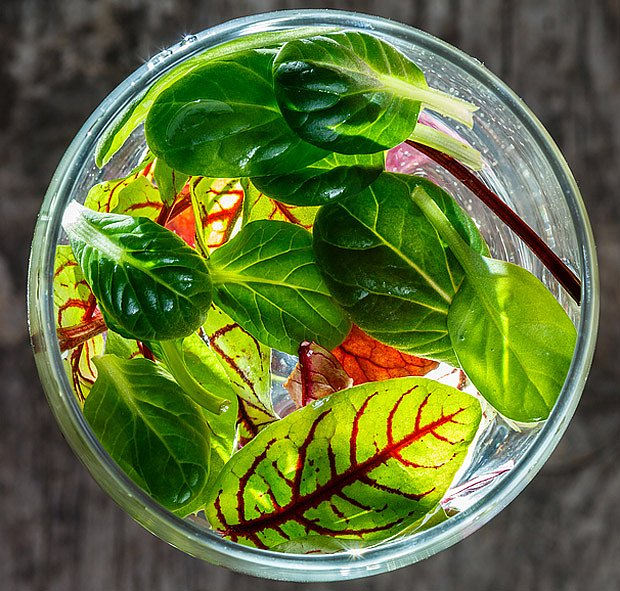 Mladé listy mangoldu se hodí do salátů