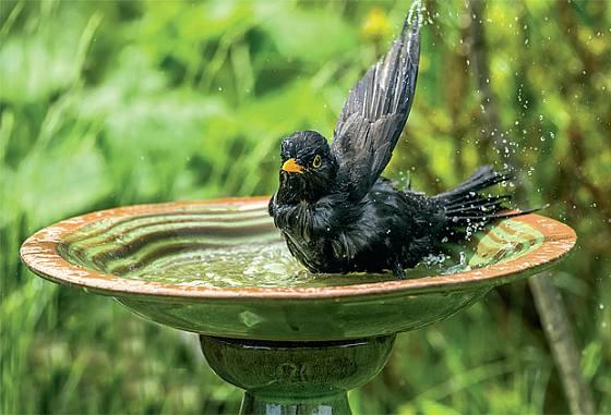 Napajedlo pro žíznivé hosty