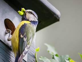 Ptáci se za hnízdní budky odmění lovem housenek a mšic