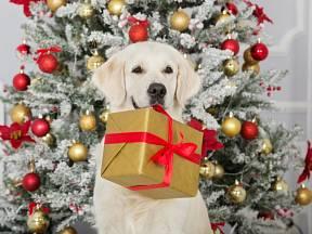 Jaké dárky připravit pro své čtyřnohé kamarády?