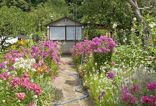 Díky zálivce a hnojení kvetou trvalky až do podzimu