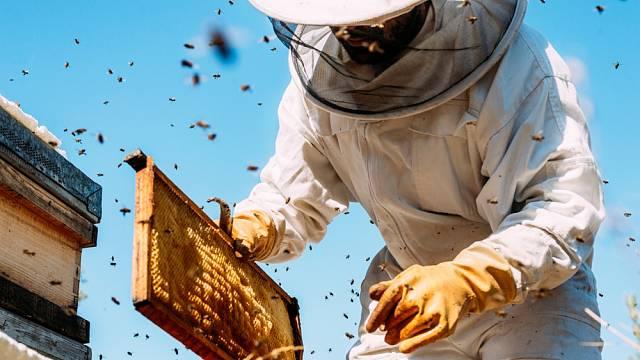 Jaký dopad by mělo na lidstvo, kdyby vyhynuly včely