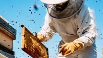 Od včel se získává med, propolis, mateří kašička vosk, jed i pyl