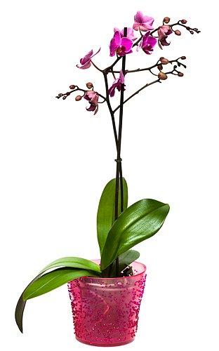průhledný květináč