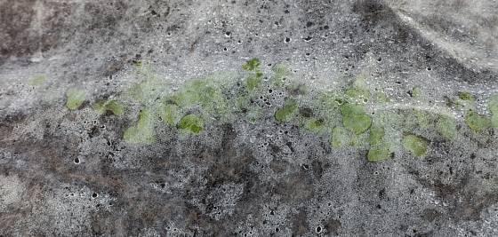Venku i ve skleníku ochrání semenáčky netkaná bílá textilie