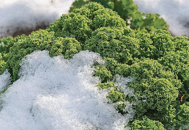 čerstvá zelenina i v zimě