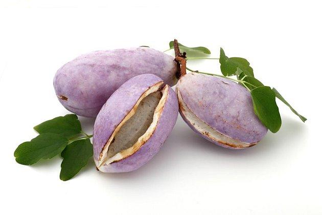 Plody akébie jsou jedlé a velmi chutné