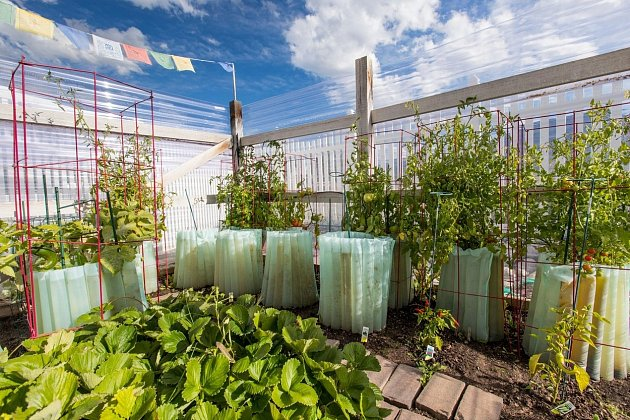 Rajská a papriková zahrada s bazalkou, oreganem a dalšími bylinkami bude lépe prosperovat