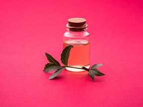 Části stromu neem se používají v ajurvédě