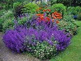 Šanta vynikne ve větším trsu, který můžete zkombinovat s dalšími květinami