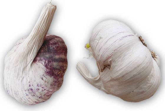 Španělský česnek