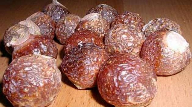 mýdlový ořech