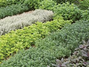 Bez čerstvých voňavých bylinek by bylo léto fádní