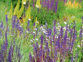 Společně rostoucí květiny musí mít podobné nároky na půdu a osvětlení