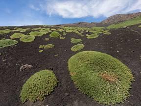 Holá lávová pole Etny osídlují houževnaté pionýrské rostliny