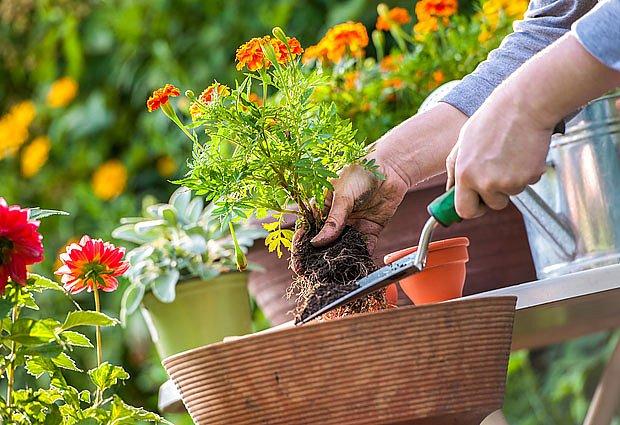 Květiny pěstované v nádobách jsou na kvalitu substrátu obzvlášť citlivé