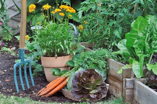Zeleninu můžete sklízet od jara až do podzimu