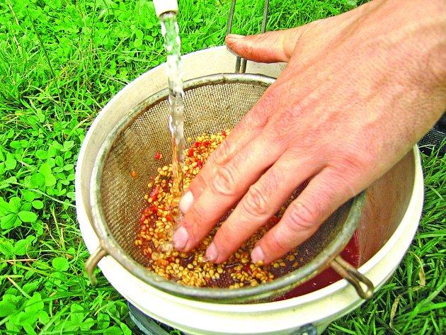 Proplachování semen na sítku