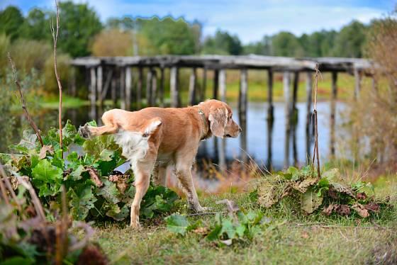 I značkování psů na zahradě se dá zabránit!