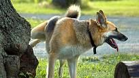 Neviditelné značky napsané močí umisťují psi na význačná místa.